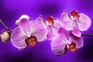 Как рассадить орхидеи - фото