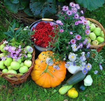Сад и огород - ФОТО
