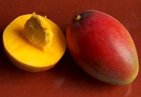 Как вырастить манго в домашних условиях (фото)